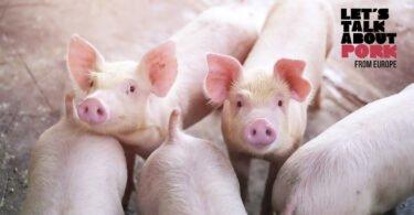 As exportações de suínos, carne de porco e derivados aumentaram 9,1% em valor no primeiro trimestre, face ao período homólogo do ano passado.