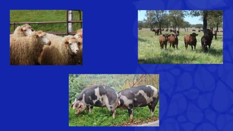 SPREGA (Sociedade Portuguesa de Recursos Genéticos Animais) e VIDA RURAL juntaram-se para dar Prémio Guardião da Biodiversidade Doméstica.