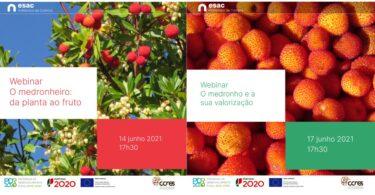 O medronho é a estrela dos webinares que a Escola Superior Agrária do Politécnico de Coimbra (ESAC-IPC) promove para os dias 14 e 17 de junho.