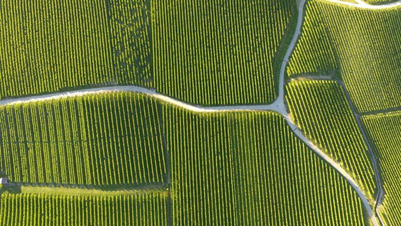 Os eleitores suíços votaram numa maioria esmagadora contra dois referendos que queriam banir o uso de pesticidas artificiais no país.