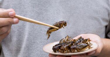 Direção-Geral de Alimentação e Veterinária (DGAV) aprovou a utilização de insetos (inteiros - não vivos ou moídos) para a alimentação humana.