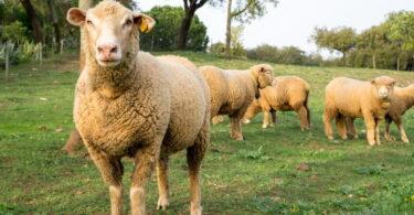 Israel suspendeu temporariamente a importação de animais vivos portugueses, anunciou a Direção-Geral de Agricultura e Veterinária (DGAV).