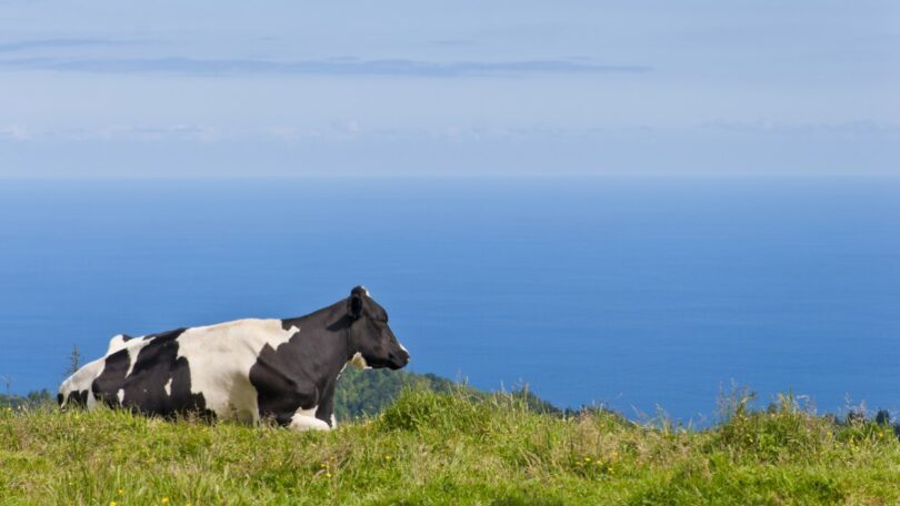O Governo Regional dos Açores vai suportar um aumento do preço do leite pago ao produtor em um cêntimo e meio até ao final ano.