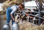 A UE vai levantar proibição à alimentação animal feita de restos de animais, inicialmente introduzida face à doença das vacas loucas.