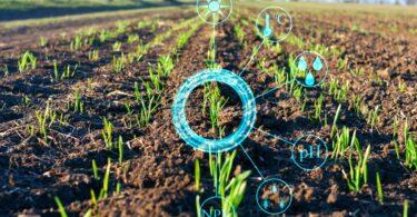 Investigadores da KAUST desenvolveram moldes que podem ser usados no fabrico de microagulhas para a monitorização da saúde das colheitas.