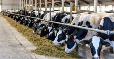 A IACA alertou para a pressão existente no setor da alimentação animal, causada pelo aumento do preço das matérias-primas.