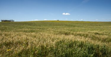 Maria do Céu Antunes anunciou a prossecução das medidas definidas na ENPPC e o restabelecimento dos pagamentos diretos ao setor dos cereais.