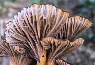 Uma carta publicada na revista científica Science apelapara que as metas globais para a conservação da biodiversidadeincluam os fungos.