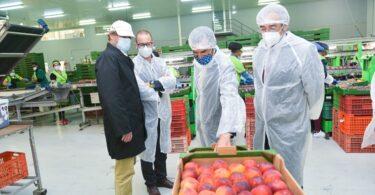 18 mil e 200 toneladas de frutas e legumes nacionais foram exportadas em 2020, através da campanha do Lidl Portugal e da Portugal Fresh.