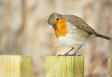 """A ANPC """"congratula-se"""" pelo chumbo da lei que proibia a importação, o fabrico, posse e venda de armadilhas para captura de aves silvestres."""