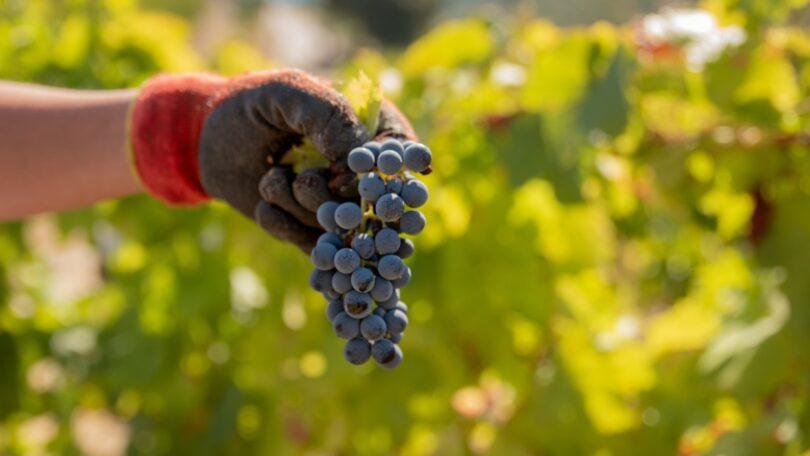 As candidaturas à Destilação de Crise para 2021 abriram, sendo que a medida para o setor do vinho possui uma dotação de 10 milhões de euros.