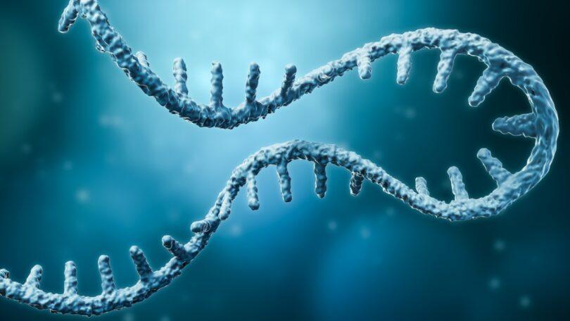 Uma modificação genética do ácido ribonucleico (ARN) levou a um aumento da produção de batata e arroz em 50%, em testes em campos agrícolas.