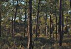 As verbas disponíveis no Plano de Recuperação e Resiliência para a área das Florestas receberam apenas 97 candidaturas.