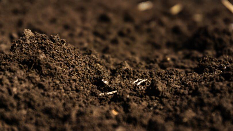 Um novo estudo revelou que os resíduos das colheitas agrícolas que são deixados a decompor no solo podem ajudar no sequestro de carbono.