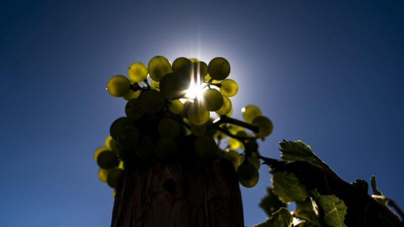A Comissão Vitivinícola Regional do Tejo (CVR Tejo) revelou que a exportação de vinhos do Tejo aumentou 36,76%, durante o primeiro semestre.