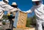A pandemia da covid-19 não teve um impacto significativo no setor do mel, revelou a Federação Nacional dos Apicultores de Portugal (FNAP).