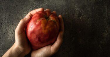 tomate coração de boi Douro