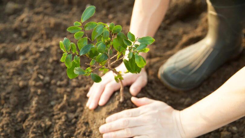 Os planos de reflorestação devem ser limitados para evitar o aumento dos preços dos alimentos nos países em desenvolvimento, alertou a Oxfam.