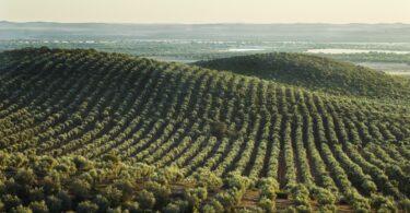 Fenareg apela para que setor agrícola seja envolvido na avaliação das culturas intensivas