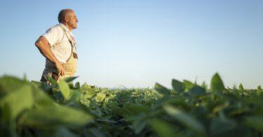 O valor total do comércio agroalimentar da União Europeia no primeiro semestre de 2021 foi de 157,1 mil milhões de euros, um aumento de 3%.