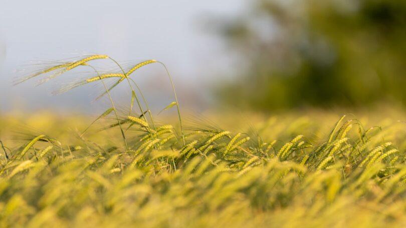 """A produção agrícola na UE vai sofrer uma redução significativa com a implementação total da estratégia """"do Prado ao Prato"""", revelou estudo."""