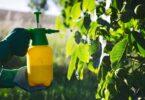 ACorteva Agriscience anunciou um acordo com a Gaïago paravalidar, desenvolvere comercializar biofungicidas para agricultores.