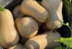 A Love Butternut é a nova iniciativa de promoção da abóbora em Portugal e em Espanha, que junta cerca de 200 produtores.