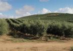 Fertilidade de solos
