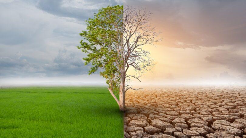 O impacto das alterações climáticas na produção alimentar esteve na base de um seminário dinamizado pela ANIPLA e pela CAP.
