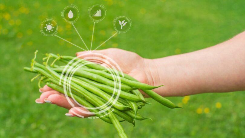Analisar frutas e vegetais e identificar bactérias e químicos prejudiciais em minutos é o objetivo de um projeto europeu.